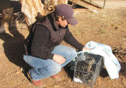 TRAPPING, NEUTERING AND RELEASING FERAL CATS