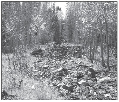 A DECOMMISSIONED FOREST SERVICE ROAD ON HAYCAMP MESA IN THE SAN JUAN NATIONAL FOREST.