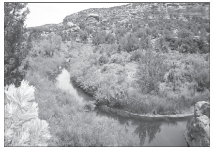 RECAPTURE CANYON NEAR BLANDING UTAH