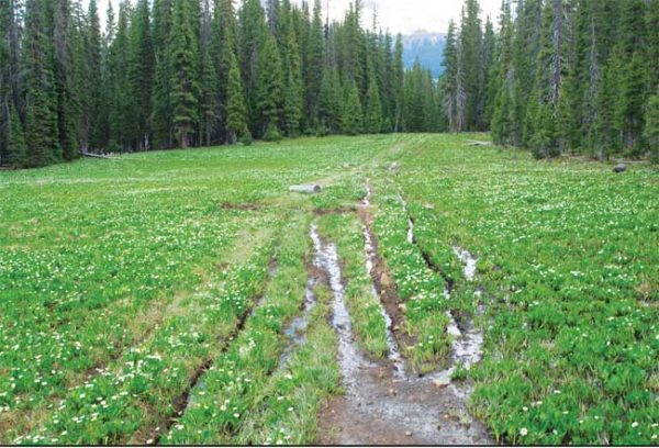 This 2015 photo shows single-track damage to wetlands and meadows on the Northern Calico Trail in the Dolores Ranger District.