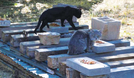 The pandemic has hurt local efforts to spay and neuter feral cats.