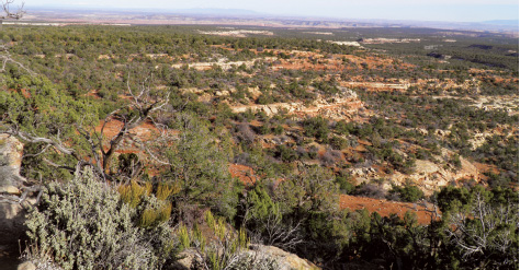 The future of the Bears Ears landscape remains in question.