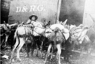 Olga Schaaf Little, burro packer
